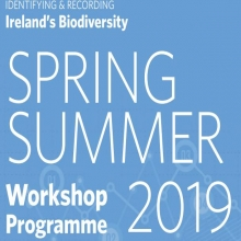 National Biodiversity Data Centre has launched its Workshop Programme for Spring/Summe
